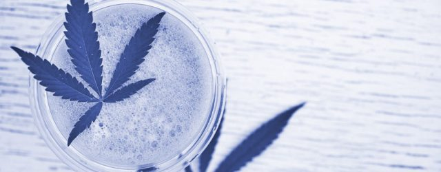 Die Produktion von Cannabidiol – von der Pflanze bis zum fertigen Produkt